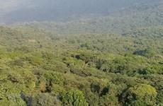 Provincia de Ninh Thuan fortalece protección y repoblación forestal