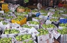 Camboya exporta primer lote de mango fresco a China