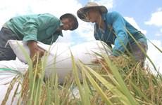 Vietnam figura en grupo de países con desarrollo humano alto