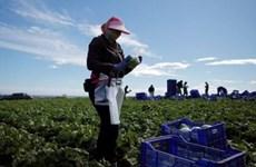 Vietnam presta atención especial a los migrantes