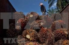 Indonesia aumenta impuestos a la exportación de aceite de palma crudo