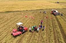 Bélgica apoya la producción sostenible de arroz de Vietnam