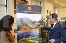 Presenta Vietnam lo mejor de su cultura en Egipto