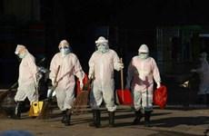 Tailandia aplica medidas de zonificación para control epidémico