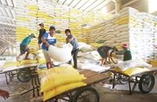 Cultivadores de arroz en Vietnam se benefician del programa de reducción de emisiones