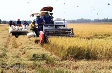 Provincia vietnamita de Bac Giang promueve industrias hacia desarrollo agrícola