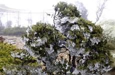Suspenden clases en localidades montañosas de Vietnam por frío severo