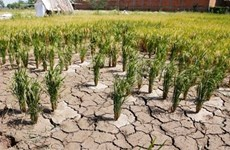 Camboya completa NDC actualizada de convención sobre cambio climático