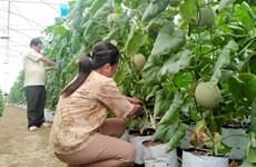 Provincia vietnamita de Tien Giang por crear más empleos en 2021