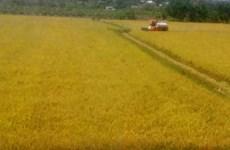 Provincia vietnamita de Long An ampliará modelos de protección ambiental