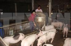 Vietnam tendrá vacuna contra peste porcina africana en tercer trimestre de 2021