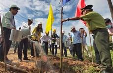 Lanzan campaña de plantación de árboles en provincia vietnamita de Ben Tre