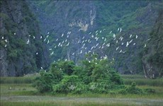Vietnam intensifica conservación y uso sostenible de humedales