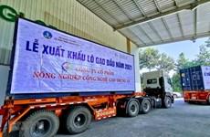 Vietnam exportará mil 600 toneladas de arroz fragante a Singapur y Malasia