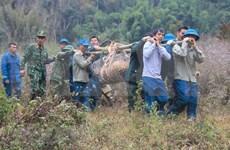 Desactivan con éxito una bomba de 600 kilogramos remanente de la guerra en Vietnam