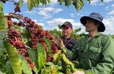 Exportación agrosilvícola y acuícola de Vietnam supera los tres mil millones de dólares en enero
