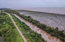 Agilizan desarrollo sostenible de delta del Mekong asociado con adaptación al cambio climático