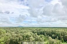 Servicios ambientales forestales de Vietnam generarán 121 millones de dólares en 2021