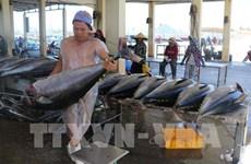 Crecen exportaciones de atún de Vietnam a UE gracias al EVFTA