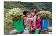 Imágenes resaltan esfuerzos de provincia vietnamita por desarrollar economía