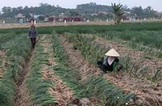 Consumo de productos agrícolas avanzará hacia la diversidad y sostenibilidad