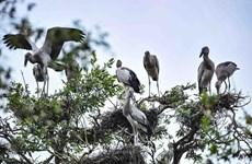 Vietnam propone establecer una red de sitios Ramsar