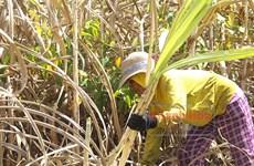 Provincia vietnamita impulsa desarrollo socioeconómico de las minorías étnicas