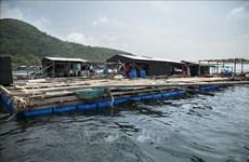 Provincia vietnamita de Kien Giang por impulsar cría de animales acuáticos