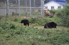 Vietnam fortalece protección de vida silvestre