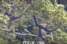Provincia vietnamita por expandir el hábitat de especie amenazada