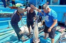 Provincia vietnamita refuerza lucha contra la pesca ilegal