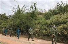 Vietnam colabora con otros países en fortalecimiento de lucha contra migración ilegal