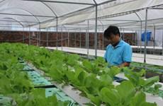 Ciudad Ho Chi Minh se convertirá en 2030 en centro de tecnología agrícola de alta calidad