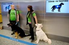Tailandia entrena perros rastreadores para detectar el COVID-19