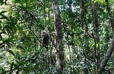 Provincia vietnamita de Binh Phuoc libera animales salvajes al entorno natural