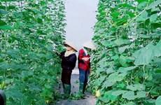 Provincia vietnamita de Bac Giang impulsa aplicación de tecnología en zonas rurales