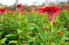 Envía Vietnam al espacio semillas de hierbas para investigar su cultivo