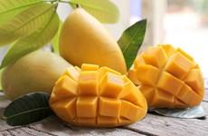 Vietnam planea alcanzar 650 millones de dólares por exportaciones de mangos
