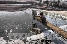 Provincia vietnamita de Bac Giang impulsa automatización en acuicultura intensiva