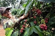 Proponen medidas para impulsar cooperación agrícola Vietnam-Rusia