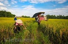 Partido Comunista de Vietnam persiste en desarrollo agrícola y rural