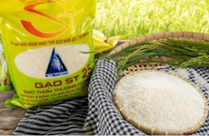 Buscan proteger marca de arroz vietnamita en mercado mundial