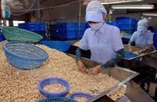 Empresas vietnamitas aumentan importaciones de anacardo crudo