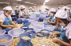 Turquía aumenta importaciones de anacardos de Vietnam