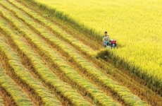 Vietnam y Suiza por impulsar la cooperación en el desarrollo agrícola