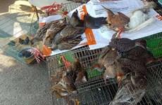 Vietnam por prevenir comercio ilegal de animales silvestres en medio del COVID-19