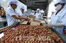 Valor de exportaciones de Vietnam aumenta 30,7 por ciento en cinco meses