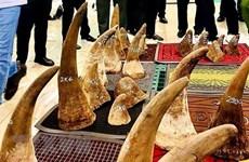 Vietnam entrega a Sudáfrica muestras de ADN de cuernos de rinoceronte