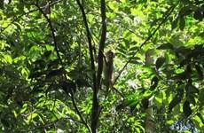 Liberan en Vietnam animales salvajes raros a bosque