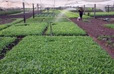 Hanoi desarrolla la industria de procesamiento de productos agrícolas